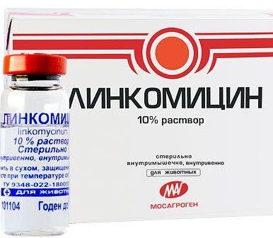 Инструкция Линкомицина гидрохлорид и ее краткое содержание