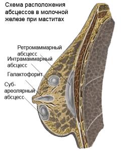Правила кормления малыша грудью