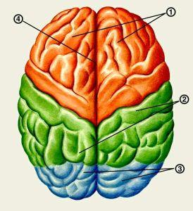 Что такое кисты сосудистых сплетений головного мозга у человека