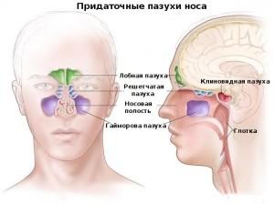 Хронический синусит и его формы