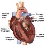 Мерцательная аритмия: ее симптомы, причины и лечение