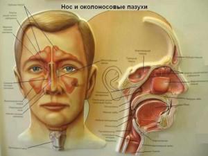 Гайморит – это такое заболевание, которое возникает из-за воспаления слизистой оболочки так называемых гайморовых пазух
