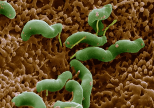 Гастрит может быть вызван хеликобактерной инфекцией