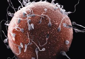 Цвет спермы