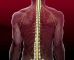 Каковы функции спинного мозга человека и его возможные нарушения
