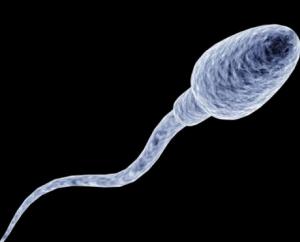 Неподвижный сперматозоид