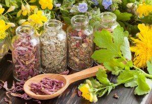 Лечебные травы для мозга