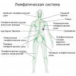 Лимфаденит: причина воспаления лимфоузлов в паху