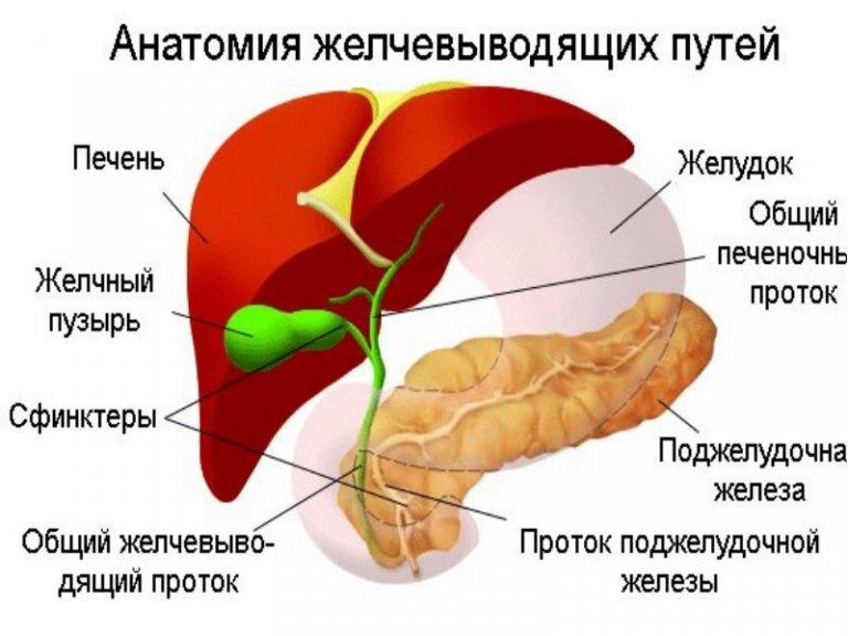 Диета печени и желчевыводящих путей