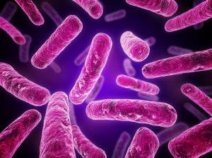 Препараты для лечения хламидиоза убивают хламидии