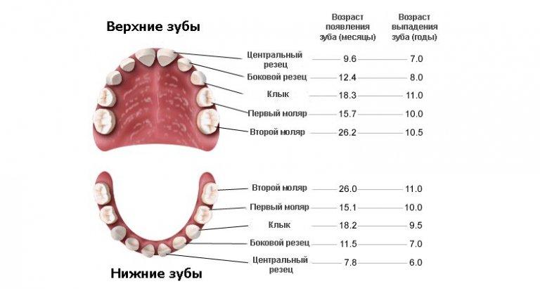 Какие не выпадают молочные зубы у детей схема выпадения