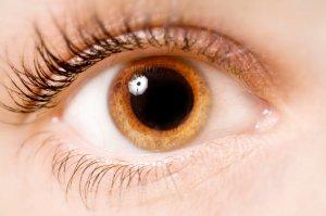 Вегетативная нервная система меняет размер зрачка