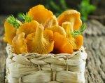 Лисички: полезные свойства и народные рецепты