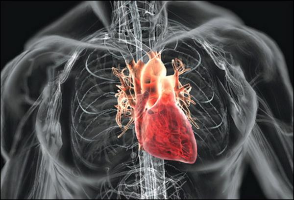 Какие признаки заболевания сердца чаще всего свидетельствуют о проблемах с сердцем