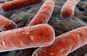 Виды туберкулеза