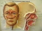 Какие следует принимать капли в нос при гайморите