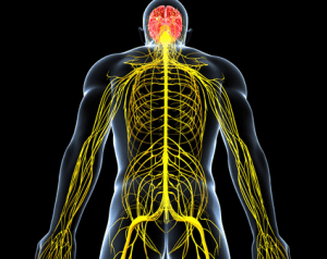 Физиология нервного возбуждения