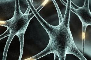 Исследования нервных клеток