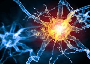 Нервные клетки человека