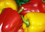 Красный болгарский перец: польза и вред, витамины, как использовать в кулинарии