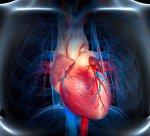 Что такое экстрасистолия и как навсегда забыть про проблемы с сердцем