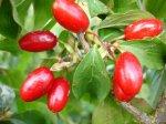 Ягода кызыл: путь к здоровой и полноценной жизни