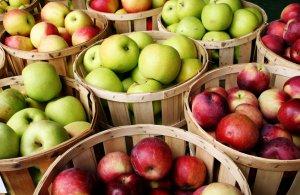 Правила сохранения яблок
