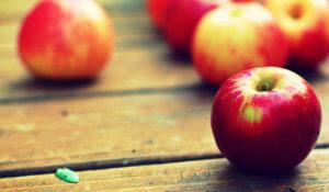 Состав яблок различных сортов